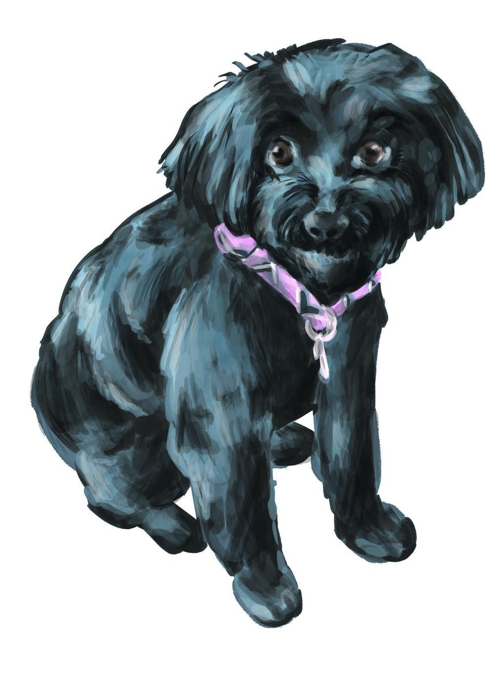 doggie1.jpg