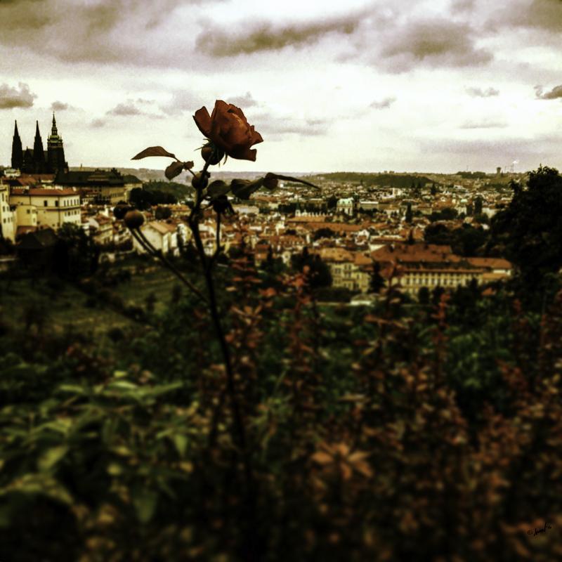 113 4713 Prague 7.5.jpg