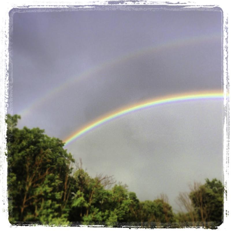 182 7109 Rainbow 7.5.jpg
