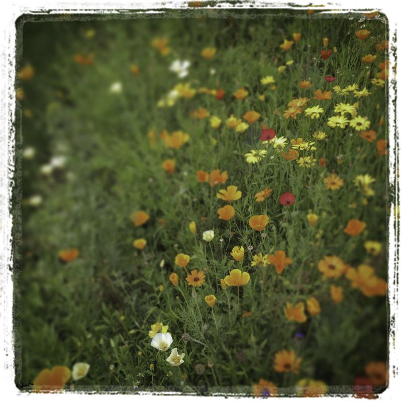 187 5373 London Flowers 7.5.jpg