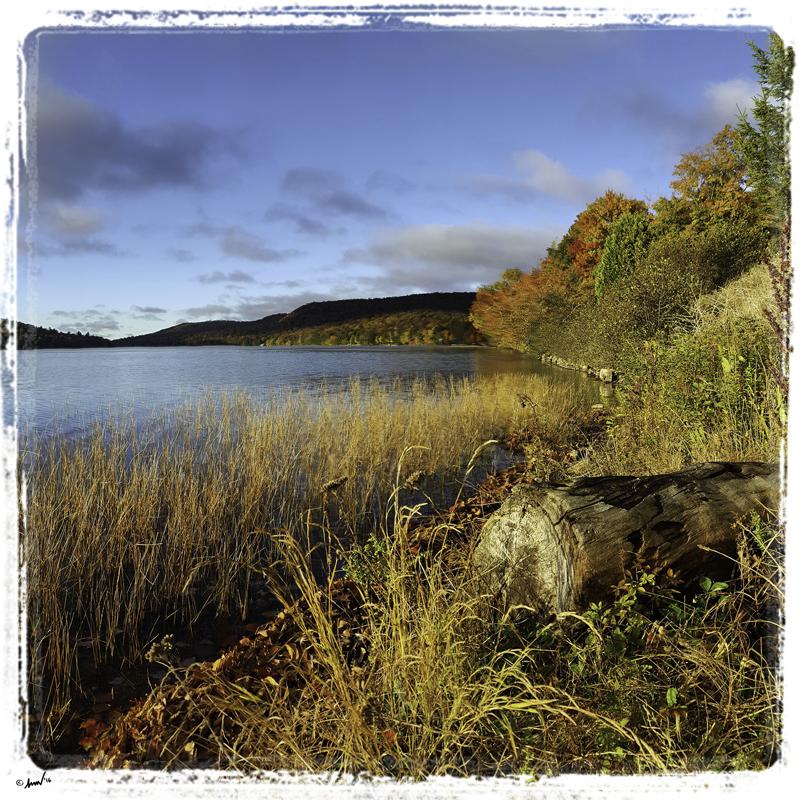 202455 Little Moose Shore Fall 7.5.jpg