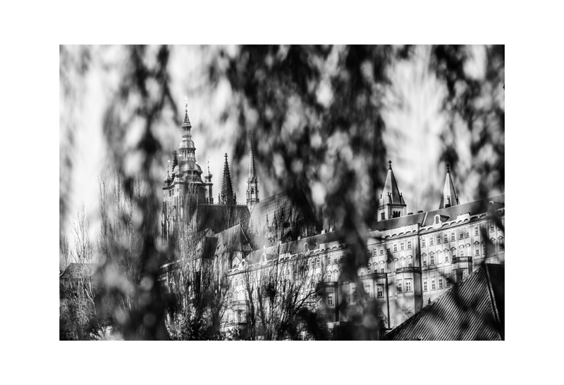 Palace through the Willows.jpg