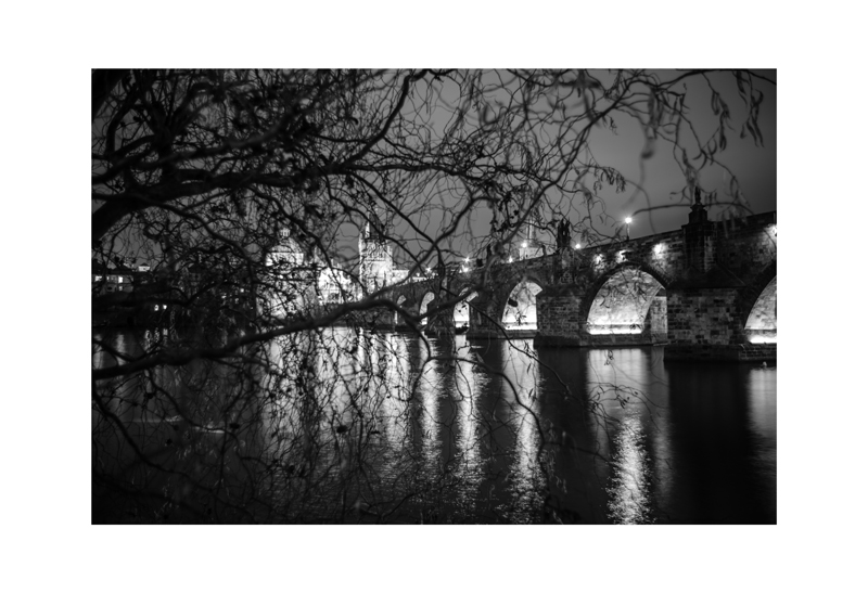 Vltava Night Branches and Bridge.jpg