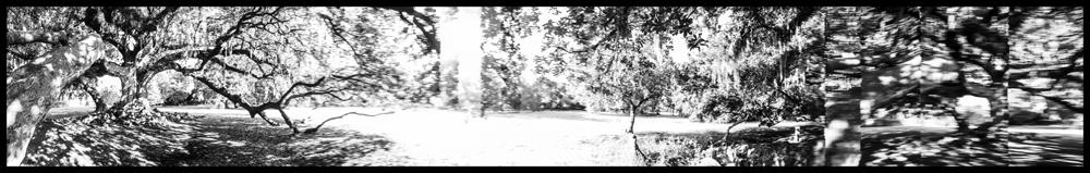 Tree of LIfe, NOLA, 2016.jpg
