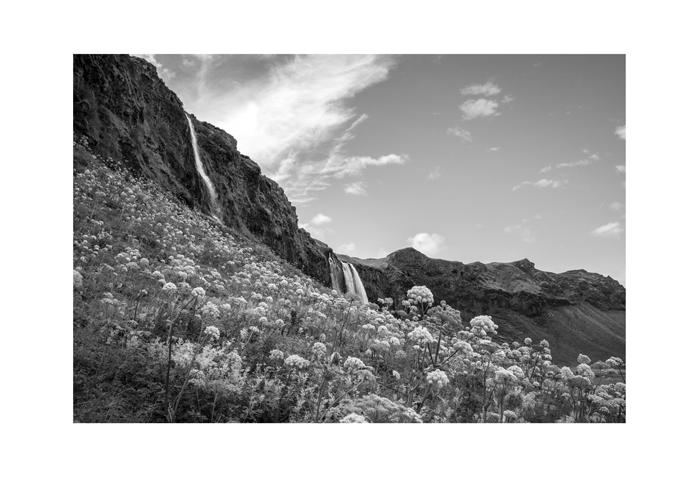 Iceland 19x13 print seljalandfoss hillside bloom.jpg