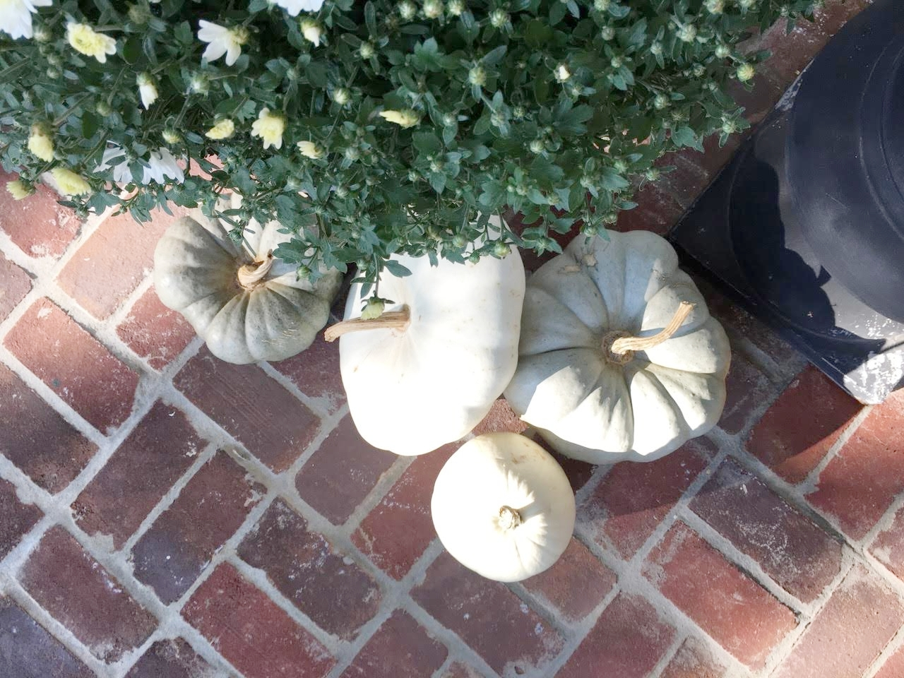 White and Gray pumpkins from above