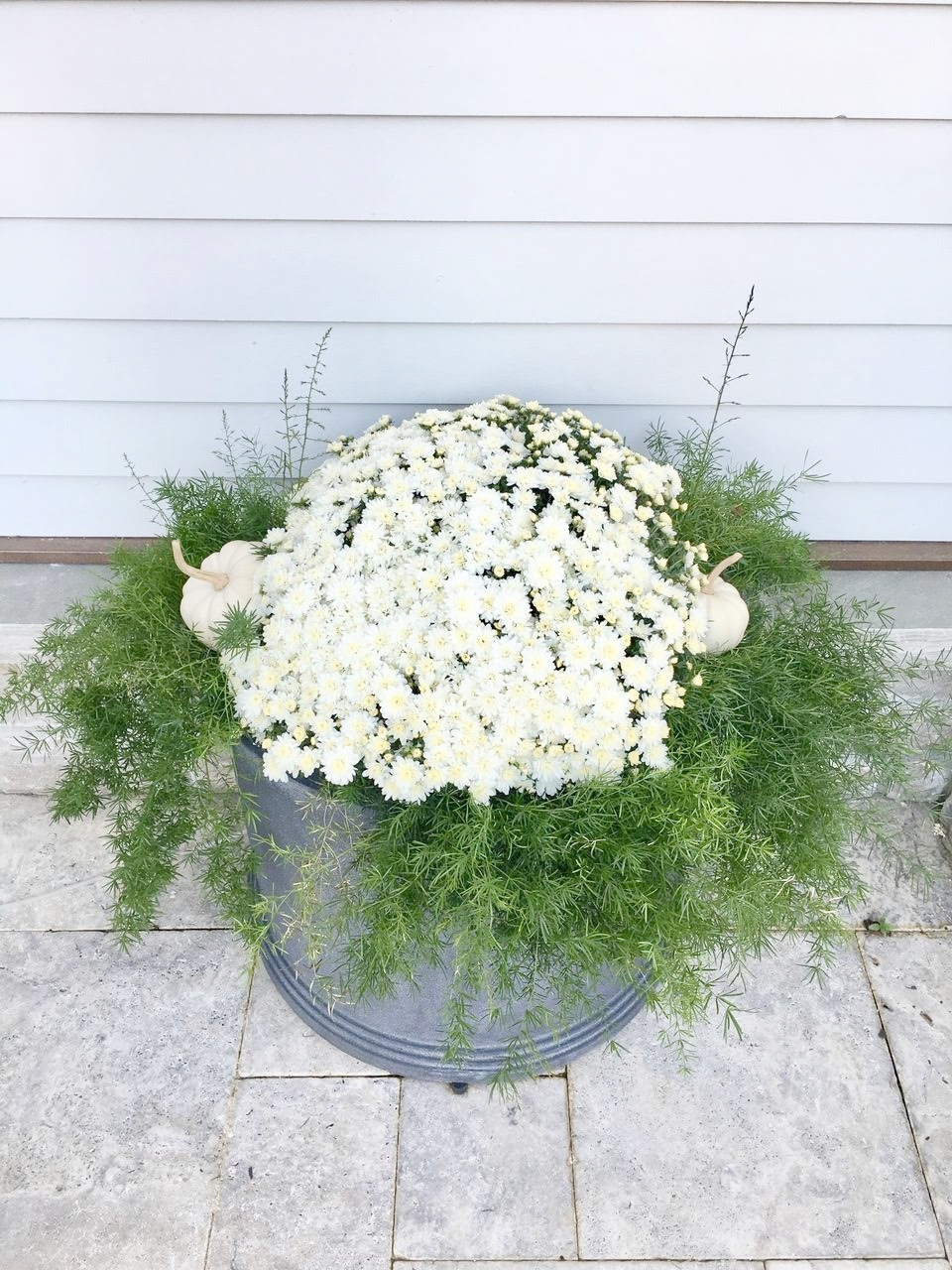White mums, white pumpkins, and asparagus fern in galvanized tub