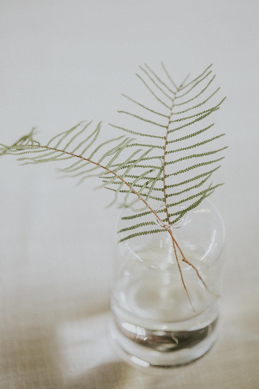 fern leaf-5.jpg