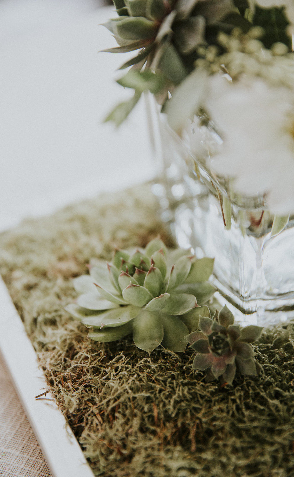 AIM Succulent Shot in arrangement.jpg