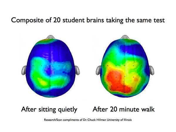 Exercise clearly increases brain activity as seen in the photo on the right. Research by Dr. Chuck Hillman, University of Illinois.