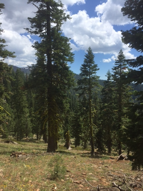 """(Mt. Eddy, California)  Nature is the best source of grounding, or Vitamin """"G""""."""