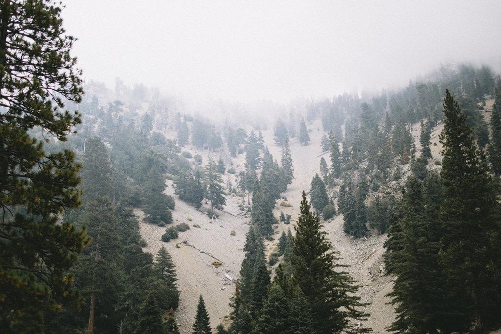 mt baldy woods-1.jpg