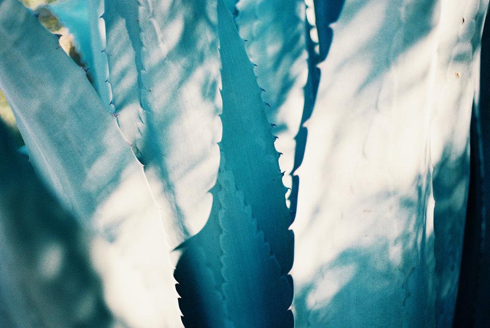35mm-film-agave-lifestyle-austin-Houston-1.jpg