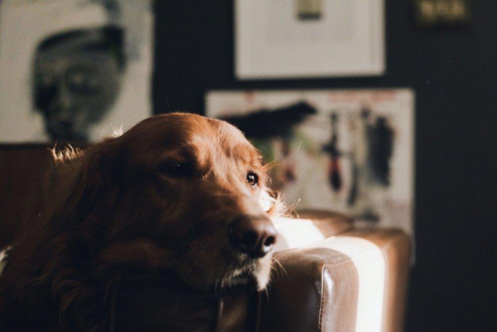 35mm-film-Portra-400-lifestyle-dog-houston.JPG