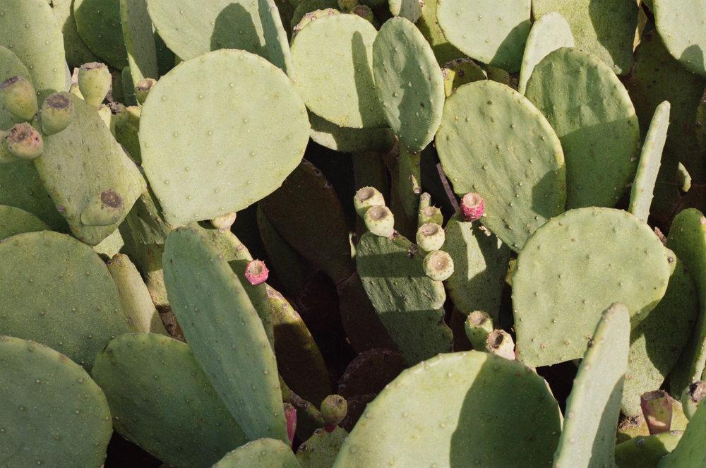 road-trip-marfa-texas-cacti-portra-160-1