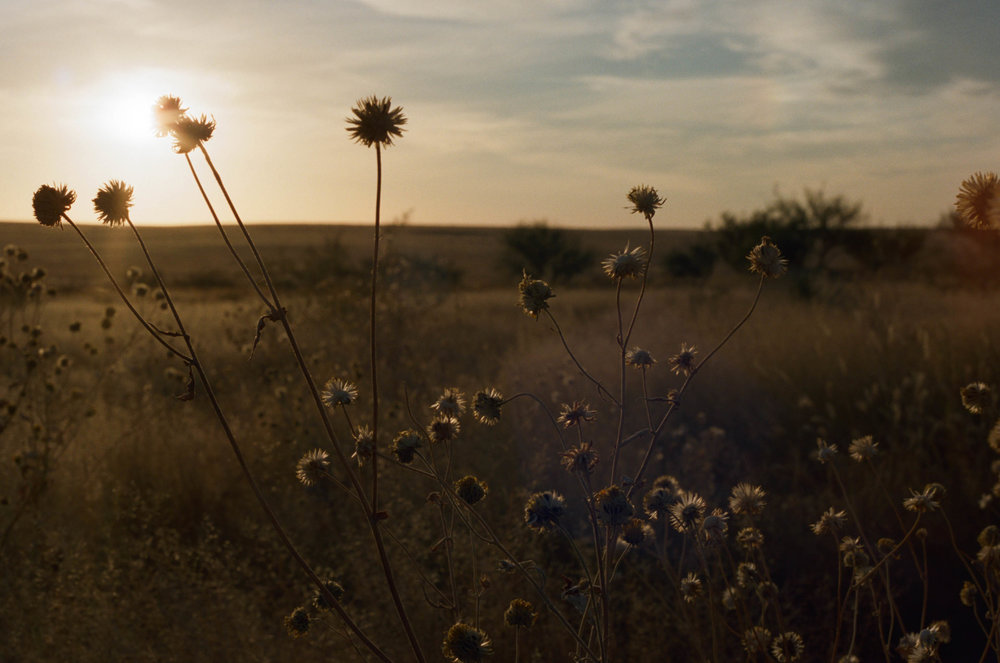road-trip-marfa-texas-sunset-plants-portra-160-1