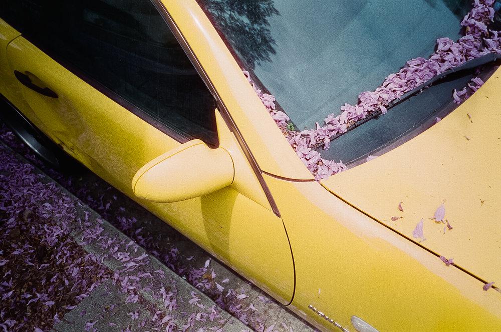 180713-kirby-gladstein-photograpy-film-LA-Sequoia-RedRocks-000014060008.jpg