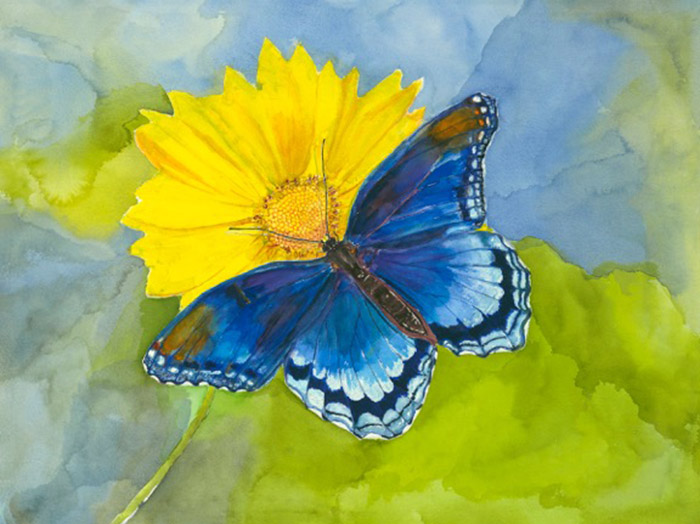 Blue Butterfly crop.jpg
