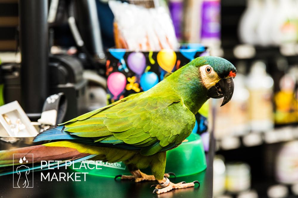 Pet Place Market -