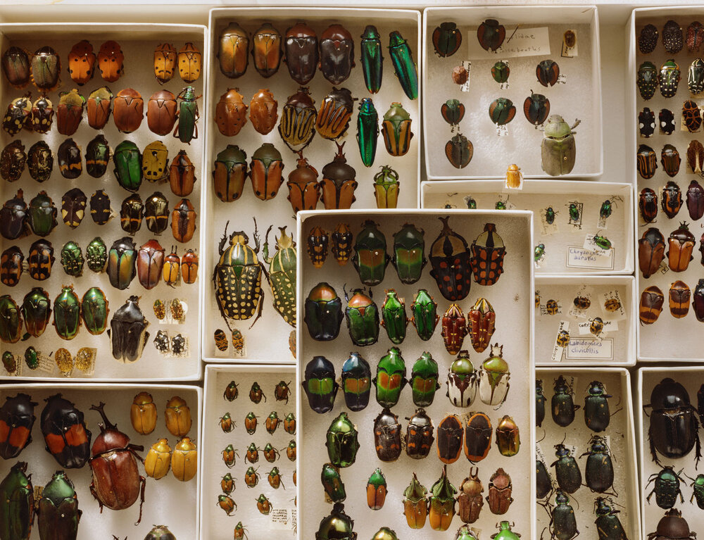 Dr. Greenberg's Beetles