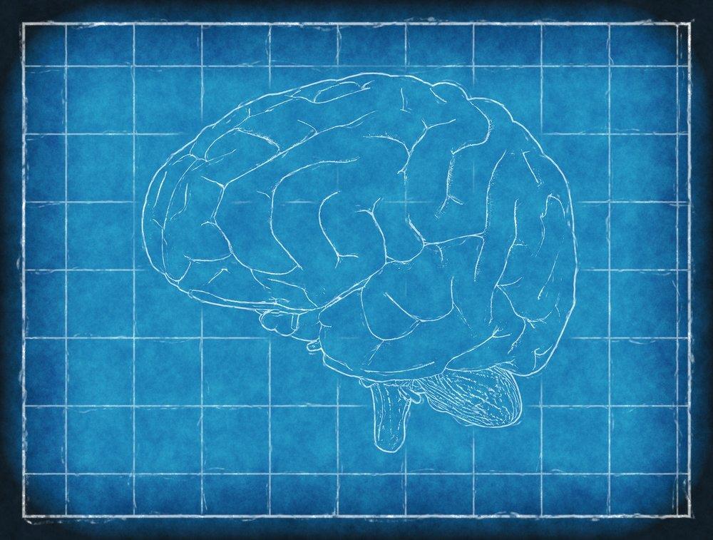brain-1845941_1920.jpg