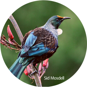 Bird Calls   Calls are identified & birds sighted from specific sites within our projects to identify numbers & diversity. Trends are tracked in relation to maturity & topography of the surrounding flora & types of habitat.