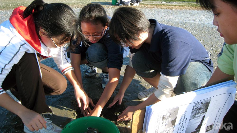 Estuarine indicator species survey
