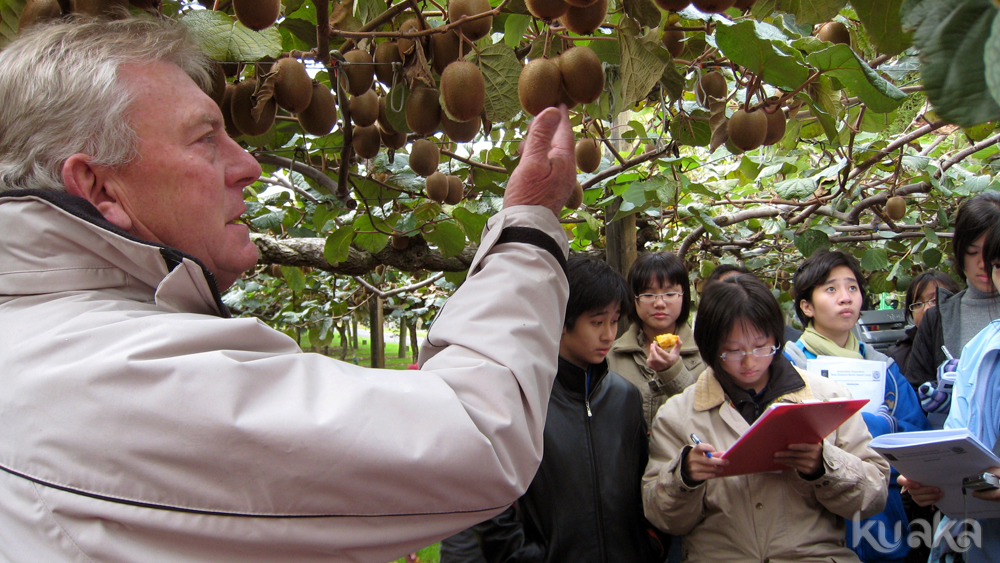 Learn about kiwifruit from under the vines