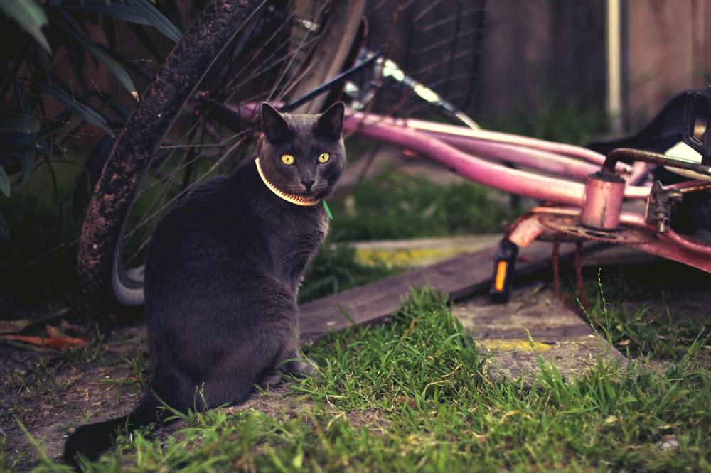 bikecat.jpg