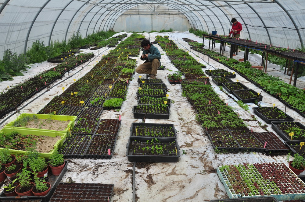 Greenhouse La Troje, where most of the local seeds are reproduced, picture by Rubén Pulido.