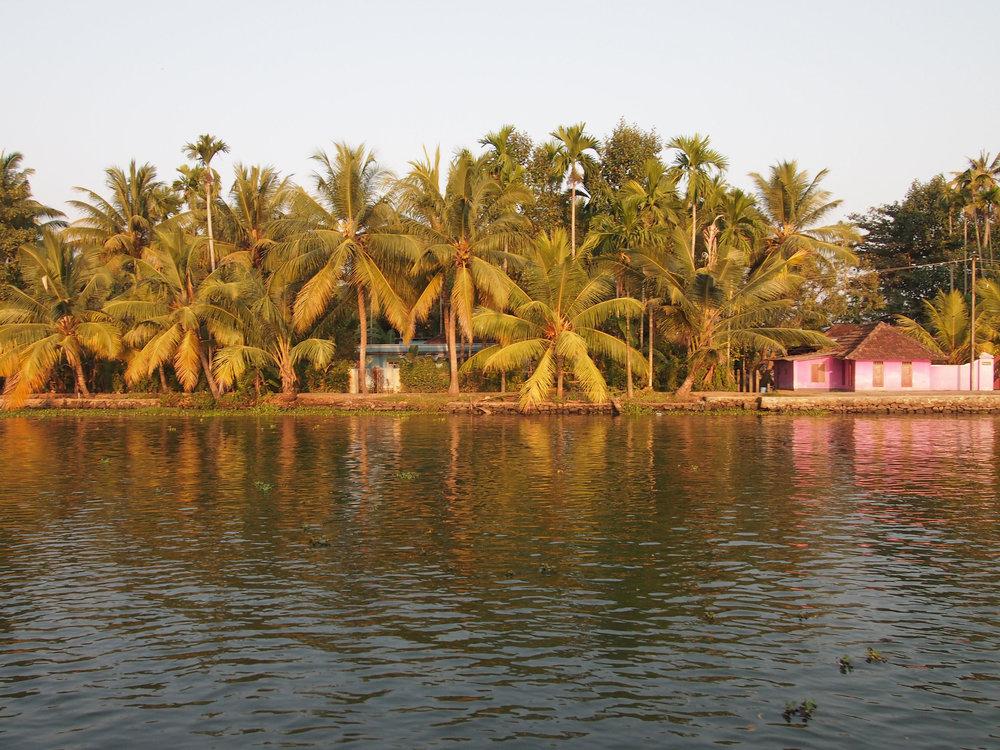 IndiaPalms1.jpg