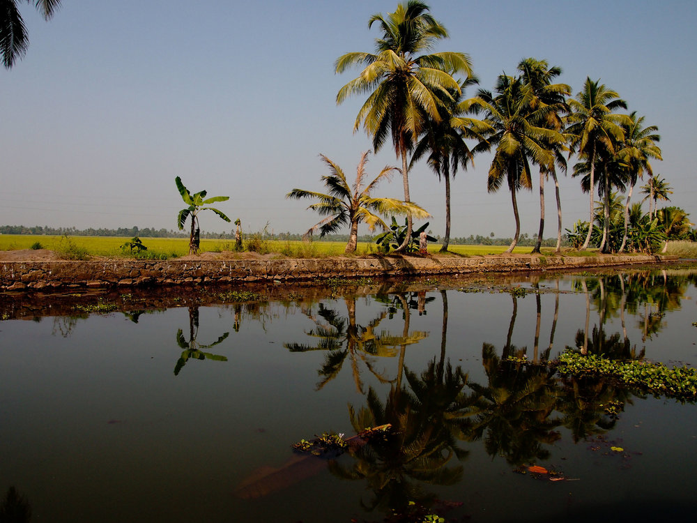 IndiaPalms2.jpg