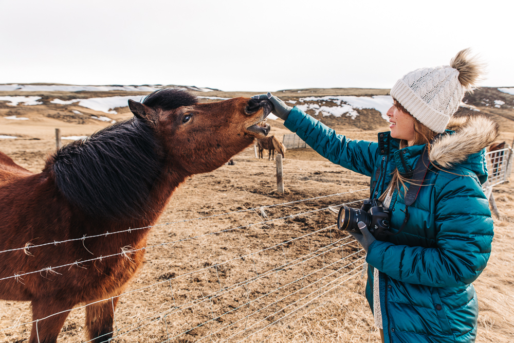 Obsessed with these friendly Icelandic horses // Photo by Ryan Sebastyan