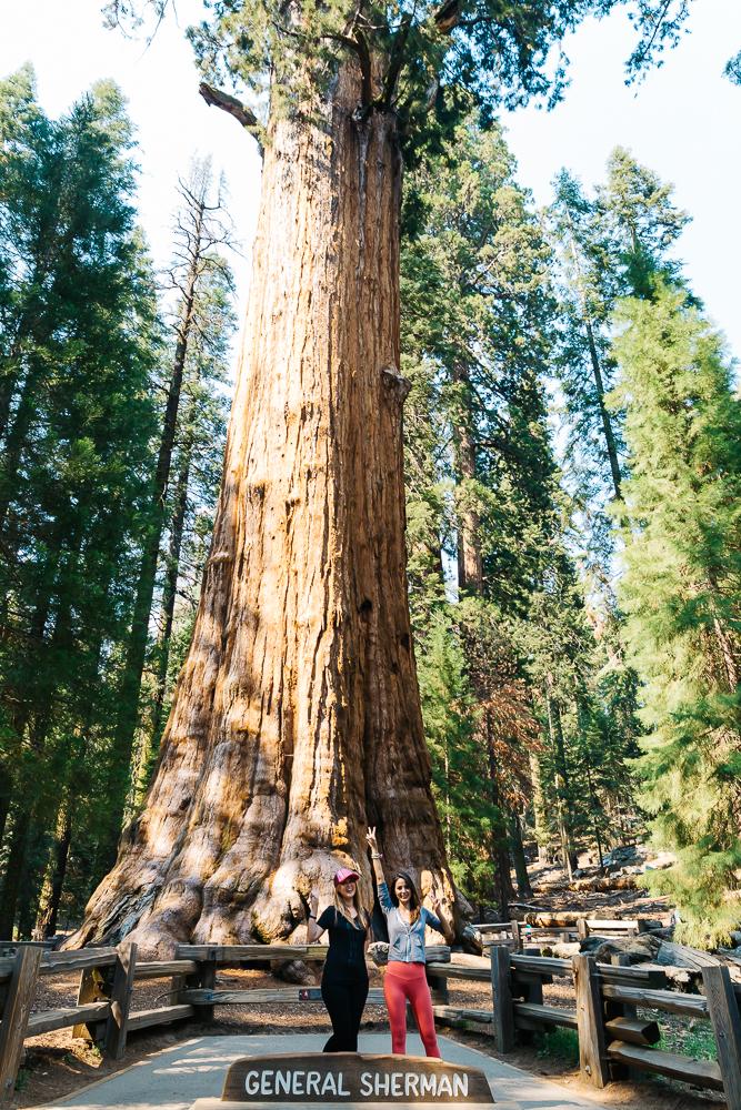 Sequoia www.thetravelpockets.com