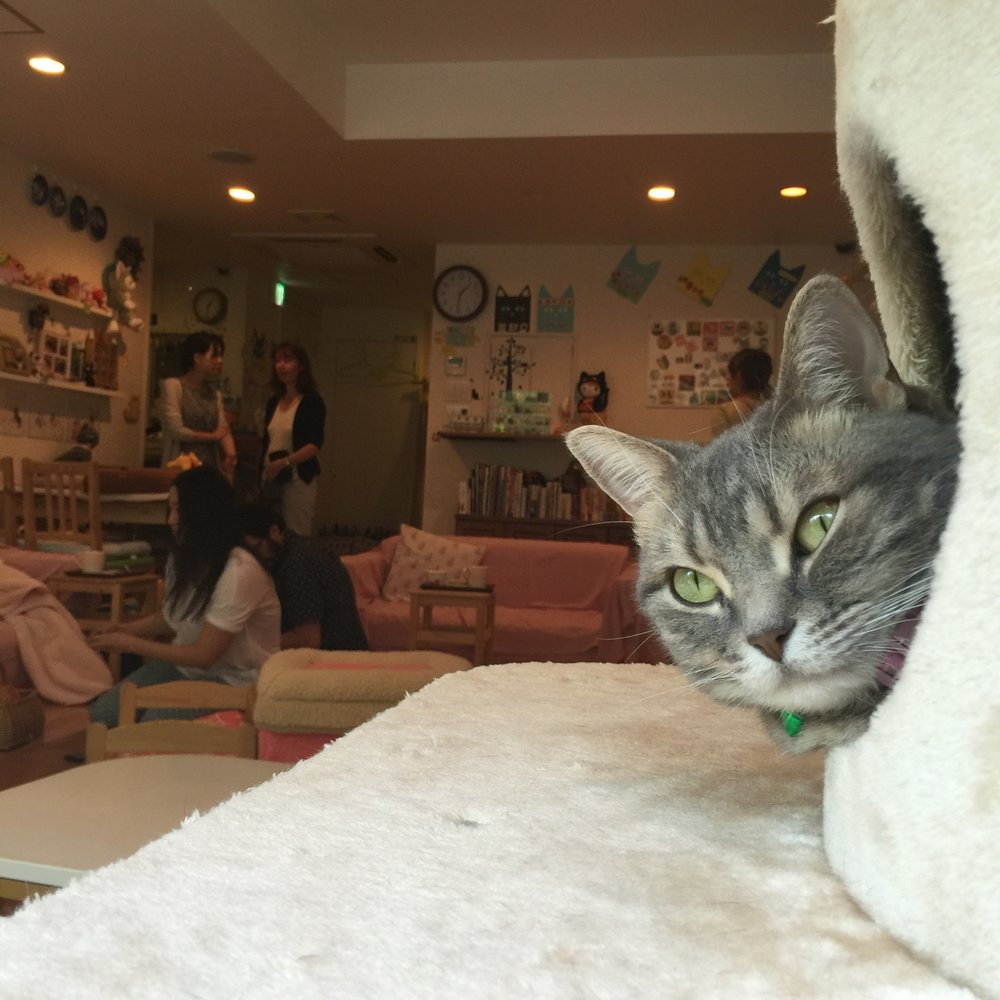 CAT CAFE SHIBUYA