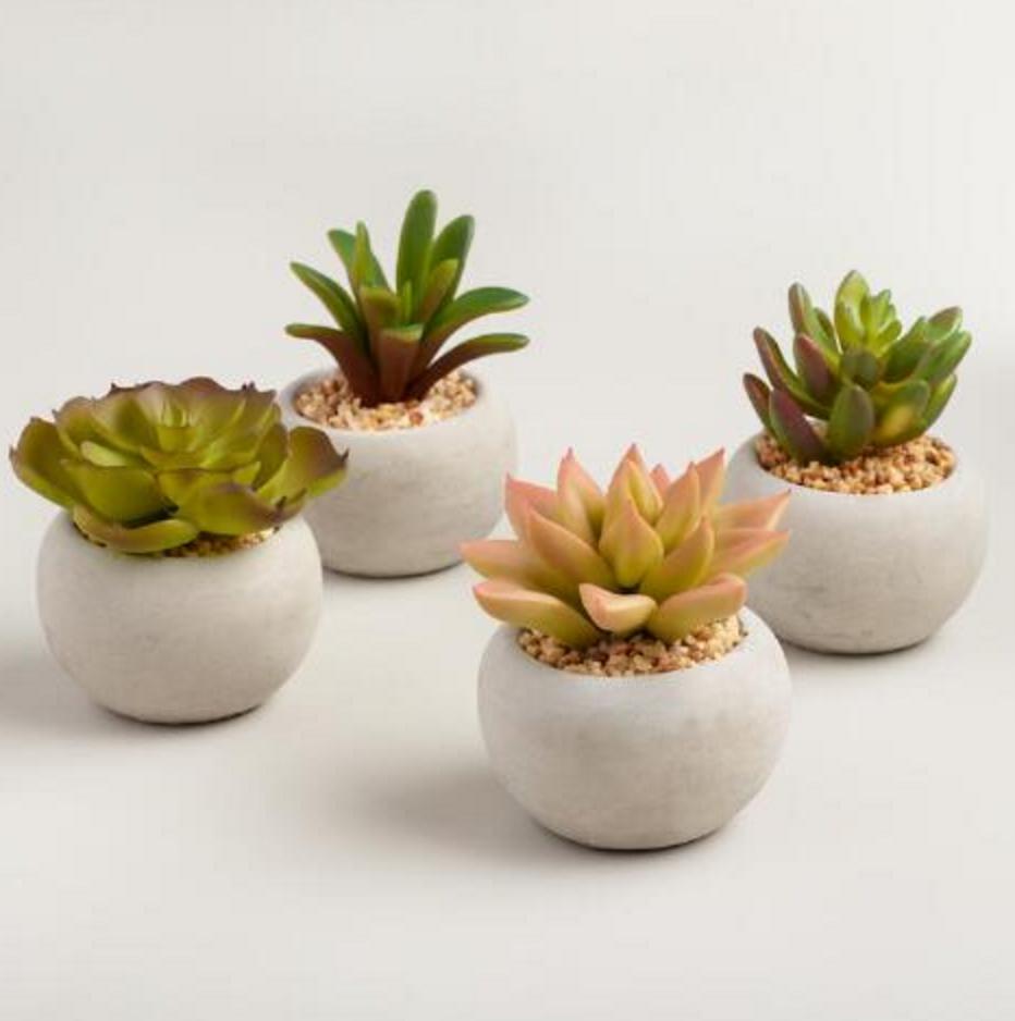 World Market Succulents