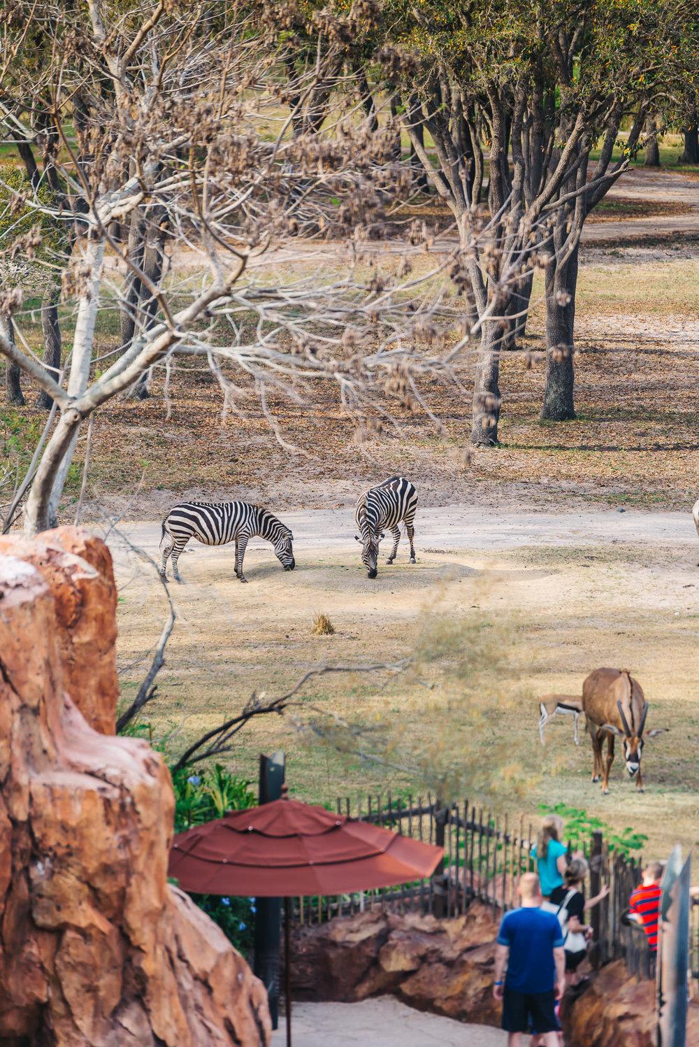 Safari Animals at the Lodge
