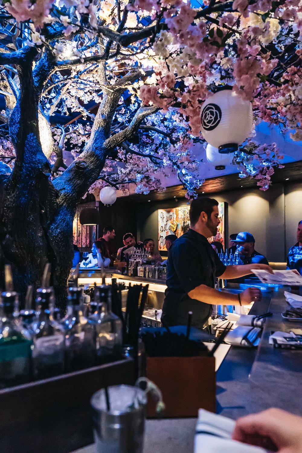 Gorgeous cherry blossom tree