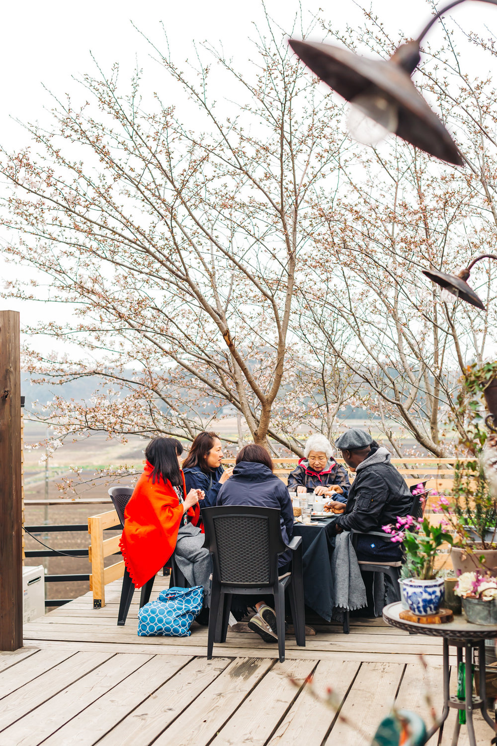 Seating under the Cherry Blossom tree