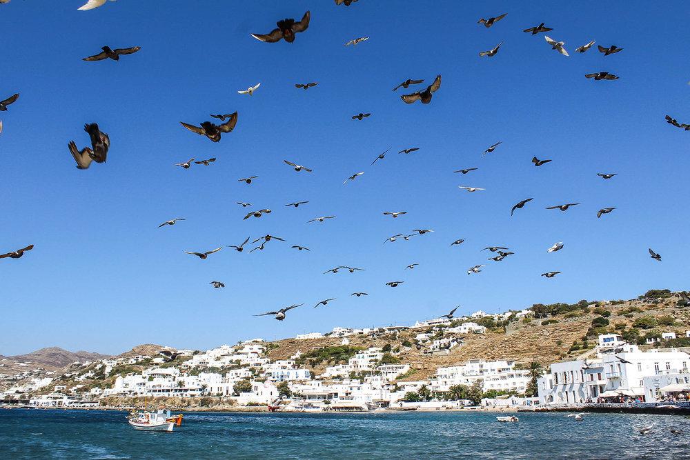 Mykonos Birds 2.jpg