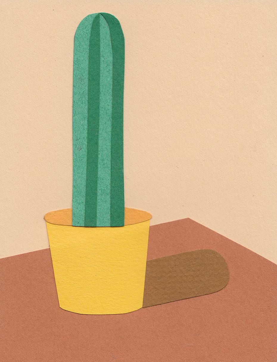 Cactus_plain.jpg