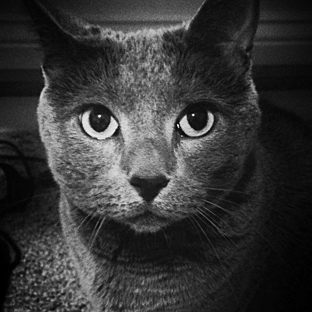 my dear cat Ilya