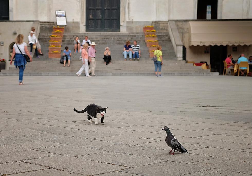 Italy street animals 1.jpg