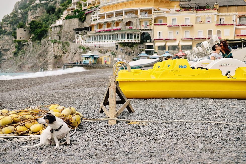 Italy Street Animals 2.jpg