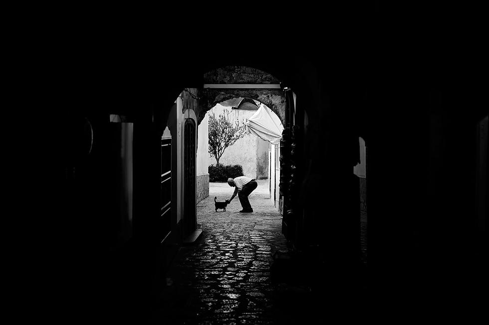 Italy-Street-Animals-3.jpg