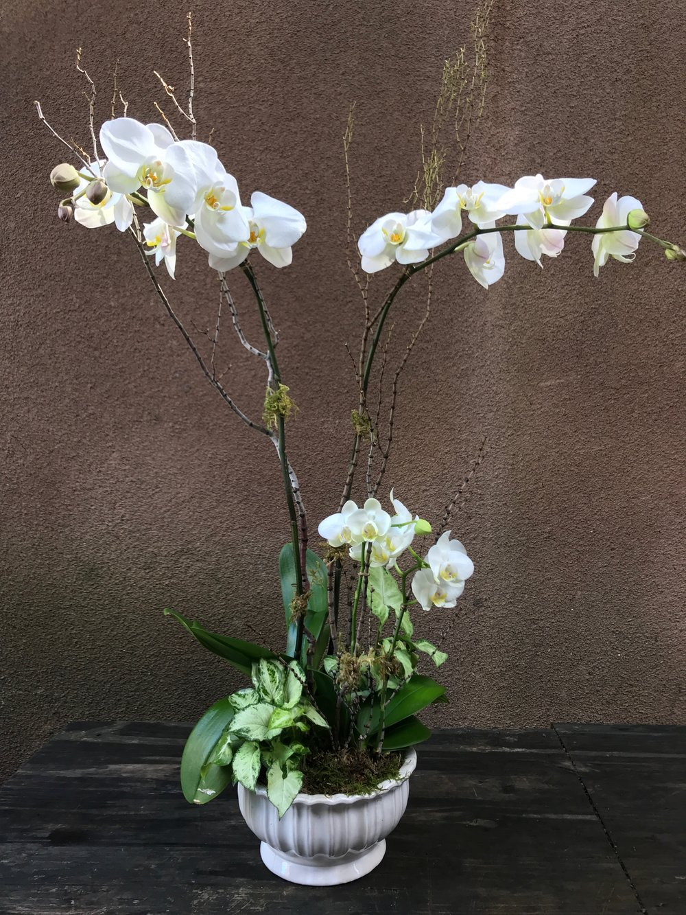 Orchid Garden white.jpg