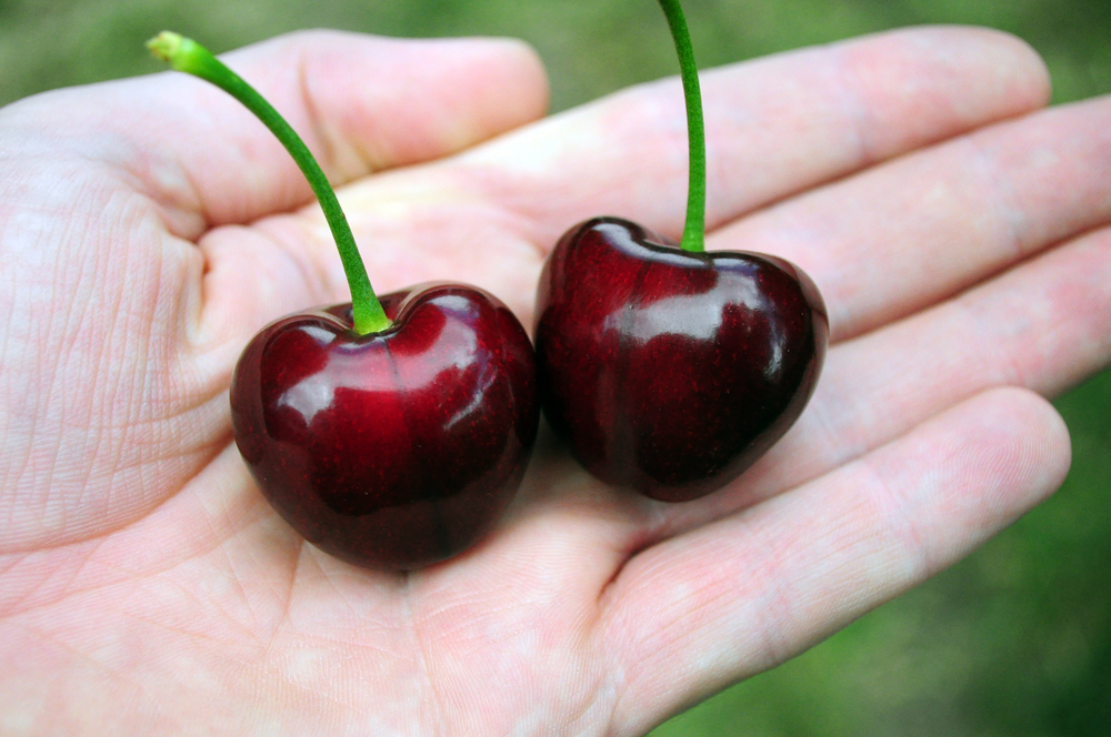 Glacier cherries - the big ones!