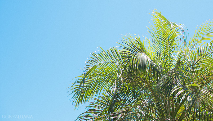 tuesday-palm1.jpg
