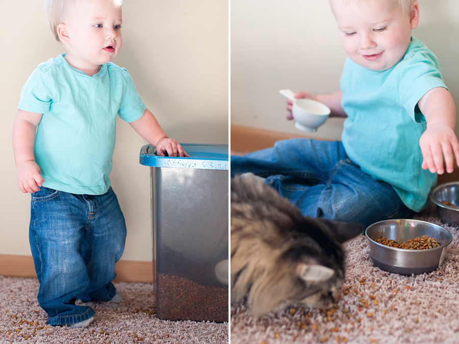 ephram-feeds-cats-2.jpg