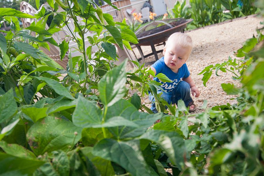 backyard-august-2011-02.jpg
